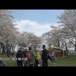 鹿ヶ城桜まつり2014